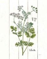 Cottage Herbs III Fine Art Print
