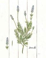 Cottage Herbs II Fine Art Print