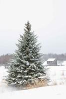 Perfect Pine Tree Fine Art Print