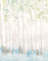 Soft Birches III Fine Art Print
