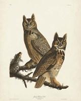 Pl 61 Great Horned Owl Fine Art Print