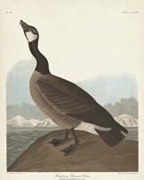 Pl 277 Hutchinss Barnacle Goose Fine Art Print