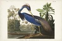 Pl 217 Louisiana Heron Fine Art Print