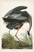 Pl 211 Great Blue Heron Fine Art Print