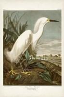 Pl 242 Snowy Heron Fine Art Print