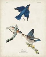 Pl 113 Blue Bird Fine Art Print