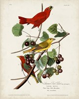 Pl 44 Summer Red Bird Fine Art Print