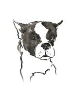 The Dog V Fine Art Print