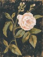 Moody Blooms I Fine Art Print