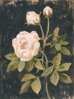 Moody Blooms II Fine Art Print
