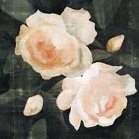 Soft Garden Roses I Fine Art Print