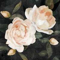Soft Garden Roses II Fine Art Print