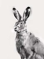 Wild Hare I Fine Art Print