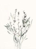 Delicate Sage Botanical V Fine Art Print