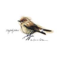 Songbird Study I Fine Art Print