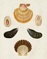 Knorr Shells I Fine Art Print