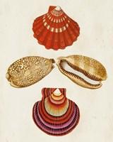 Knorr Shells II Fine Art Print