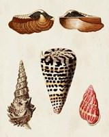 Knorr Shells III Fine Art Print