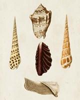 Knorr Shells VI Fine Art Print