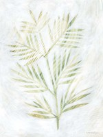 Breezy Fronds III Fine Art Print