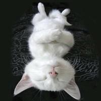 Cat Yoga III Fine Art Print