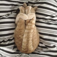 Cat Yoga IX Fine Art Print