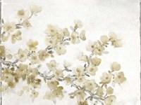 Neutral Cherry Blossom Composition II Fine Art Print