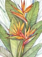 Tropical Botanical Paradise I Fine Art Print