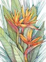 Tropical Botanical Paradise II Fine Art Print