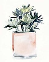 Potted Succulent IV Fine Art Print
