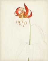 Watercolor Botanical Sketches I Fine Art Print