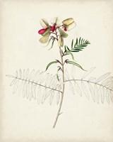 Watercolor Botanical Sketches II Fine Art Print