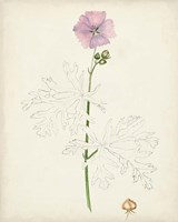 Watercolor Botanical Sketches III Fine Art Print