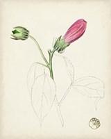 Watercolor Botanical Sketches IV Fine Art Print