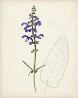 Watercolor Botanical Sketches X Fine Art Print
