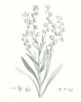 Botanical Study in Sage I Framed Print