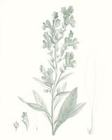 Botanical Study in Sage III Framed Print