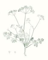 Botanical Study in Sage IV Framed Print