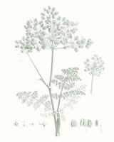 Botanical Study in Sage VI Fine Art Print