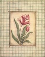 Gingham Tulip Fine Art Print