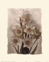 Daffodils I Fine Art Print
