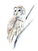 Arctic Owl I Fine Art Print