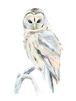 Arctic Owl II Fine Art Print