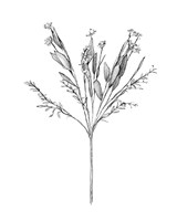 Field Flower I Fine Art Print
