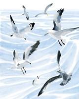 Seagull Soiree II Framed Print