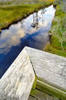 Ward Ware Nature Park, Gulf Shores Alabama Fine Art Print