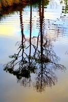Reflections in a Stream, Ward Ware Nature Park, Gulf Shores Alabama Fine Art Print