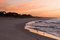 Alabama, Gulf Shores, Beach, shore birds Fine Art Print