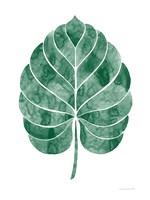 Botanic Inspiration III No Words Fine Art Print