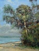 Washington Oaks Fine Art Print